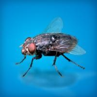 HTML5 баннер рекламирующий средства от мух
