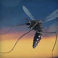 HTML5 видеобаннер рекламирующий защиту от комаров