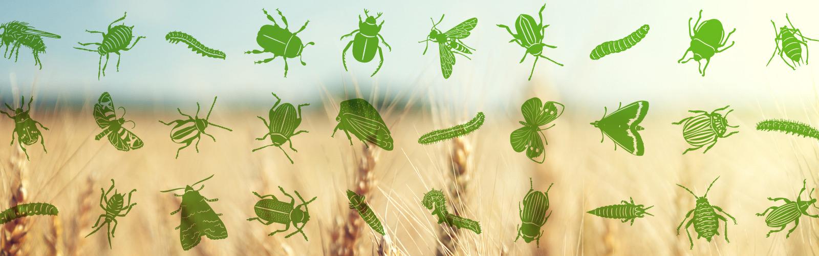 рисованные насекомые вредители для создания промо ролика инсектицида молния дуо