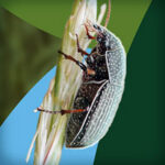 Создание промо ролика инсектицида молния дуо